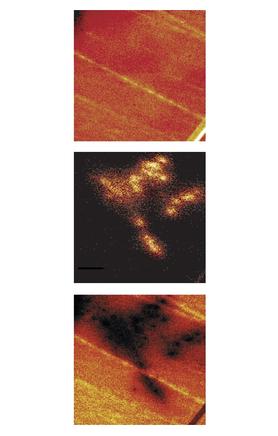 TOF-SIMS images showing, from top to bottom, the total ion image, the distribution of fluorolubricant, and a series of organic peaks in the range of 320-500u. The mass spectrum from the droplet area only is shown in the top spectrum.