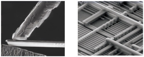 Examples of Scanning Electron Microscopy
