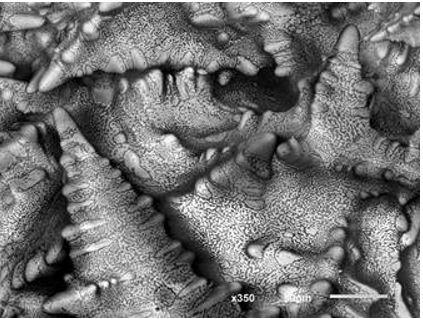 SEM Images: Tin Lead Dendrites