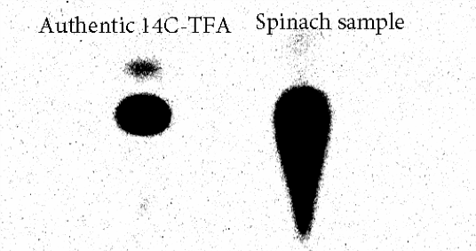 Figure 4.7: In a spinach sample grown in soil treated with [5-membered heterocyclic-14C]pesticide